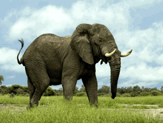 Download Animal Wallpapers