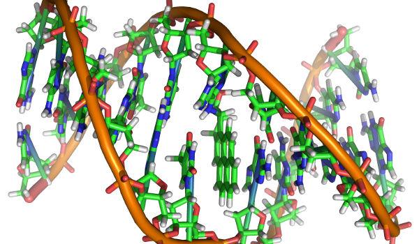 moleculehardware-dna