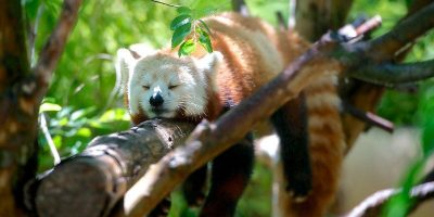 firefox-first-party-isolation-featured