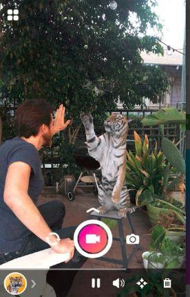 arcore-tiger-hologram