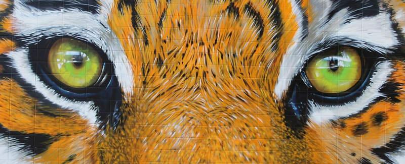 phonecamera-tiger